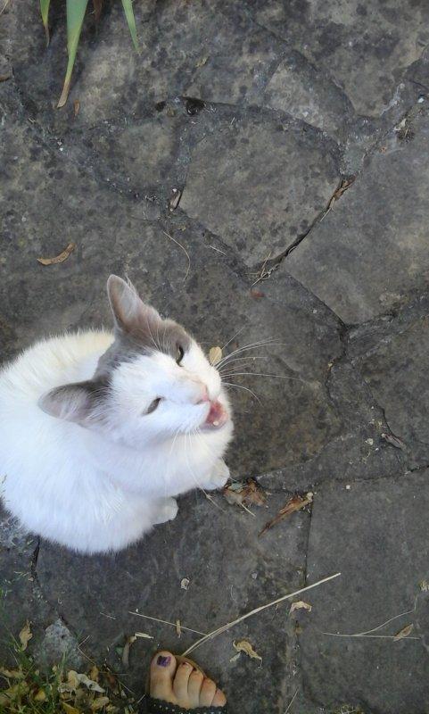 Titou. ....si ...si .....c'était bien aujourd'hui la journée du chat....