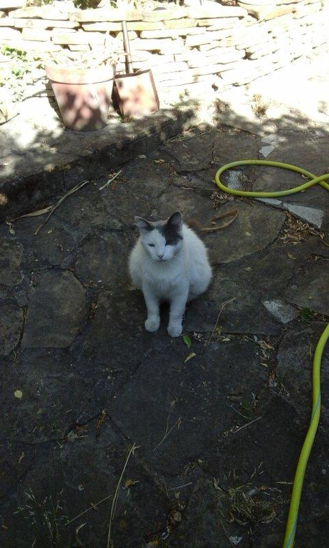 Miaou.....attend c est la journée du chat jusqu'à minuit!