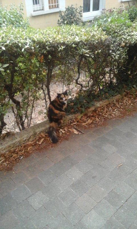 Hi hi décidément je rencontre toujours des chatounets lors de mon trajet a pied pour aller au travail.....