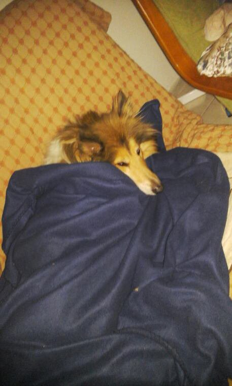 FILOU-LYS a froid......