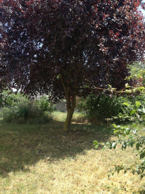 Comme j aime ce petit jardin d Auvergne....a l ombre pour vous et moi. Bon week end
