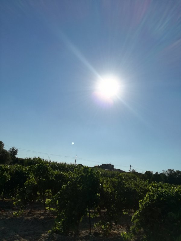 Plein soleil sur les vignes heraultaises...