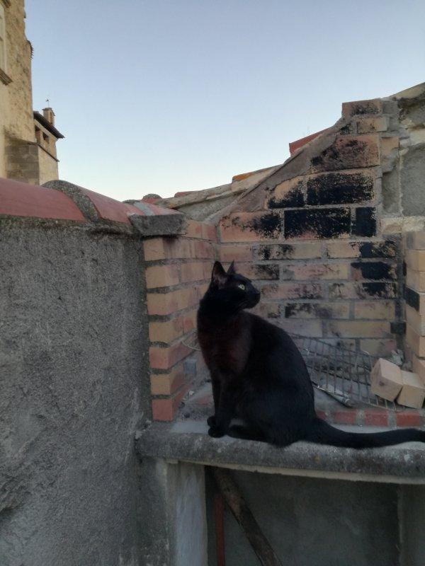 Non non maman....j ai rien fais, j 'suis sur la terrasse, j 'ai pas bougé d 'ici! Demandes a Fifi!