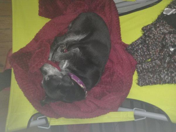 Oh que voui.... Louna aime le confort....