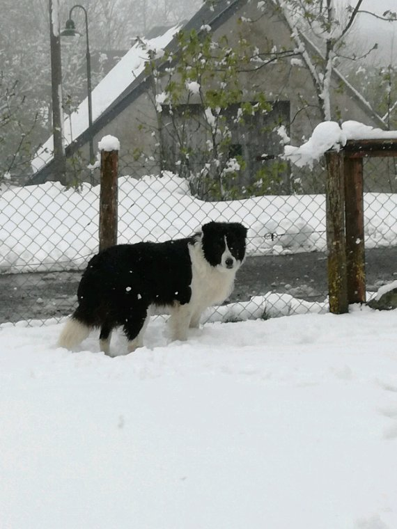 Meme pas peur de la neige!