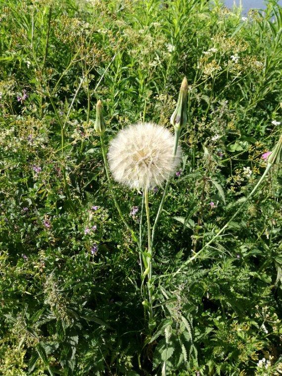 La flore....oups....Filou veut voir au loin....