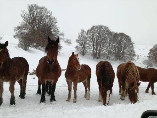 Superbes chevaux....photo prise sur mon trajet de travail....aujourd'hui