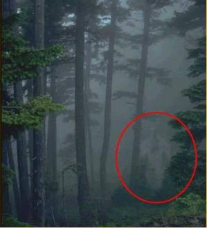 paranormal foret