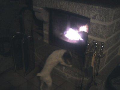 maya devant la cheminée