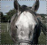 Roméo©Dreaming-Pony
