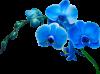 Kdo pour les amies Sylvie ,111fanfan ,Liliane59,Capucine55500 & amina-princesse-reveuse