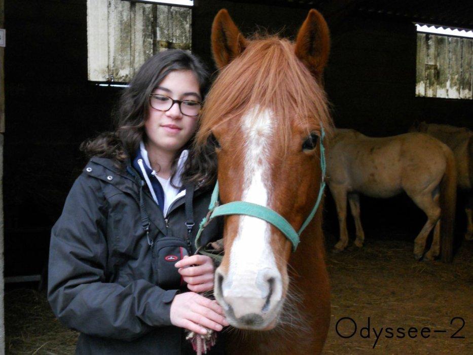 Ma passion, mon cheval