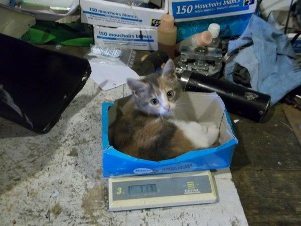 un chat tout neuf 6 jour plus tard