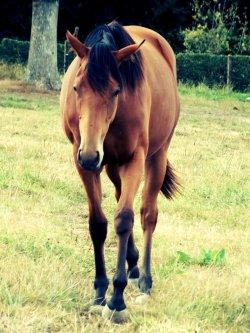 Les chevaux que je montent souvent ou qu'ils m'ont marquer !