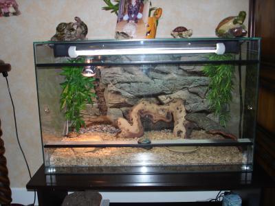 le terrarium mon petit monde de tortue. Black Bedroom Furniture Sets. Home Design Ideas