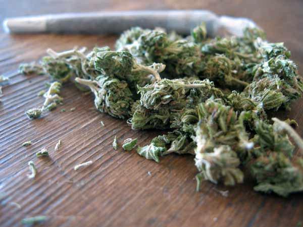 Le Cannabis.♥