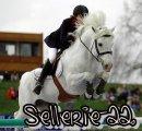 Photo de Sellerie-22