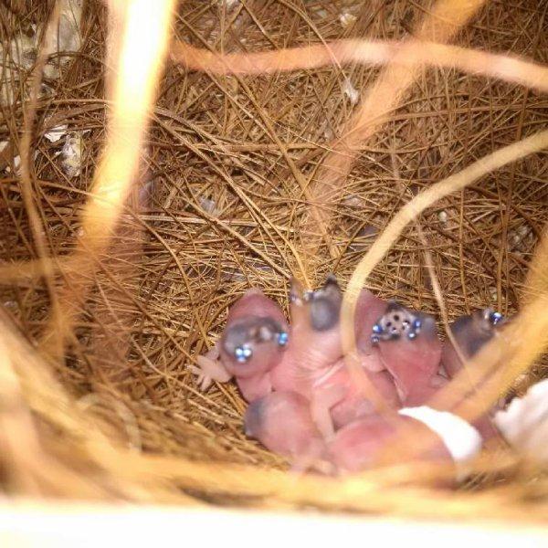 Quelques naissances malgré un démarrage tardif