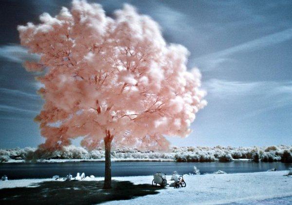 « La vie devient une chose délicieuse, aussitôt qu'on décide de ne plus la prendre au sérieux. »