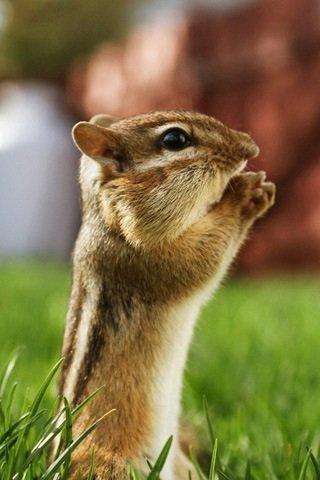 Combien de Commm'zzz pour cette Écureuil ? Goo commenter !