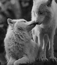 un amour éternel..... uune liaison complexe.... b