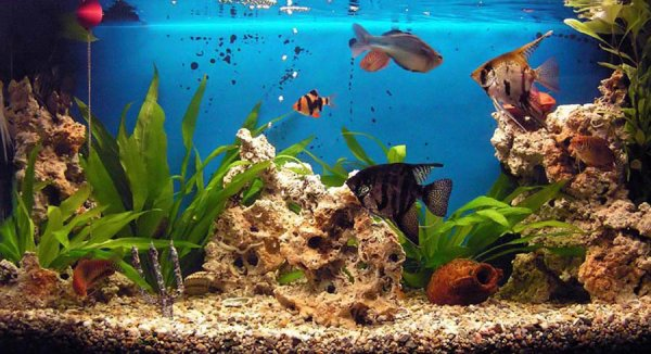 aquariul 2