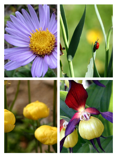 flore pyrénèene