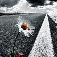 Fleur Prete a mourir Mais De Quoi ?