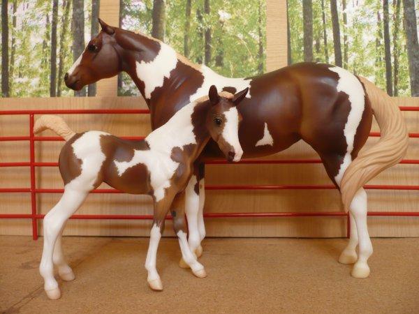 Les chevaux de Joyce - Désirée et Maissy