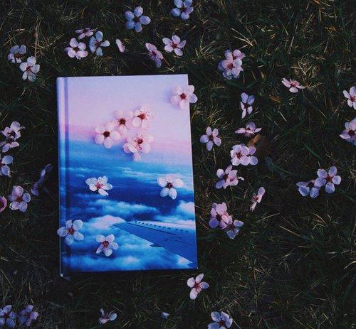 Blog de tropicae