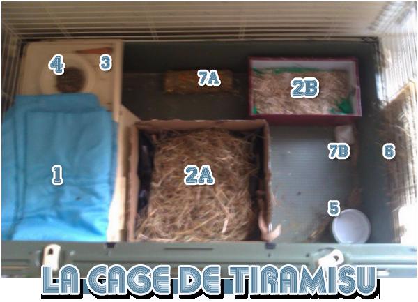 La cage de Tiramisu