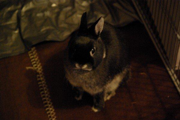 Qui a dit que les lapins étaient bêtes?