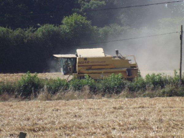moisson 2012 sur le plateau du neubourg (27)