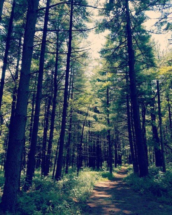 C'est tellement bon de se vider la tète dans la nature, de sentir l'odeur du bois, les bruits des animaux et, l'air pur que seule une foret peut nous offrir et nous faire sentir.