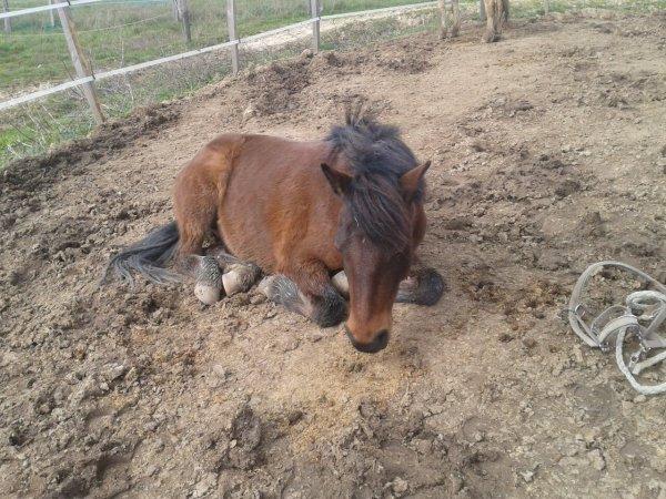 Il est fatiguer mon pony.
