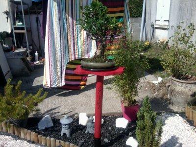 jardin zen bonsai étape 3