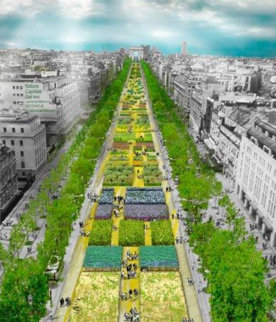 C'est bien la première fois que j'aime les Champs....