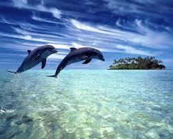 dauphin <3