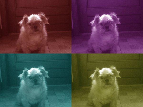 effet fait avec une tof de mon chien <3