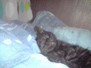Toya notre chat