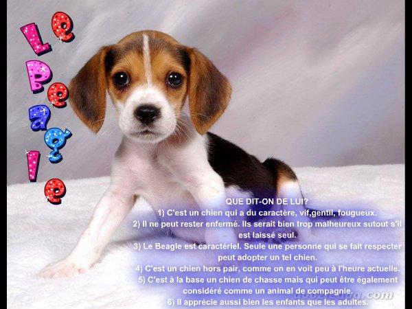 Le Beagle.