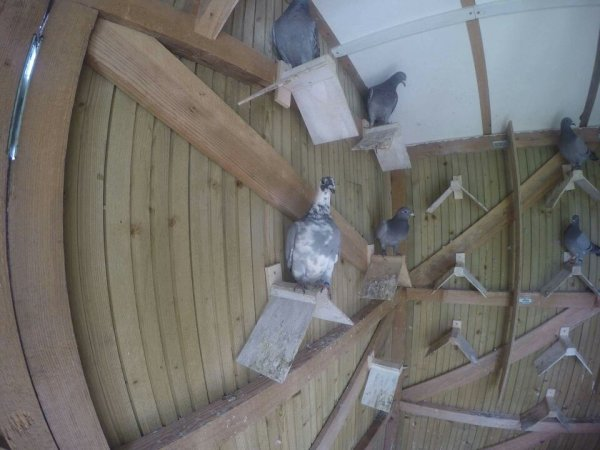 Mon pigeonnier