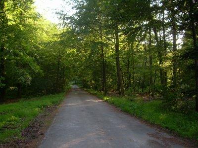 Libramont-Chevigny compte plus de 3 500 ha de forêts communales. Vous pourrez vous ressourcer à l'ombre, sous les branches de nombreux épicéas et feuillus. Le gazouillement des oiseaux vous rappellera que la forêt abrite aussi une faune variée. Vous pourriez croiser le chemin d'un écureuil, d'un sanglier, d'un chevreuil ou encore d'une biche.