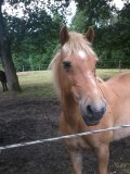 Photo de mon-poney-hercule