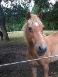 Photo de mon-poney-hercule