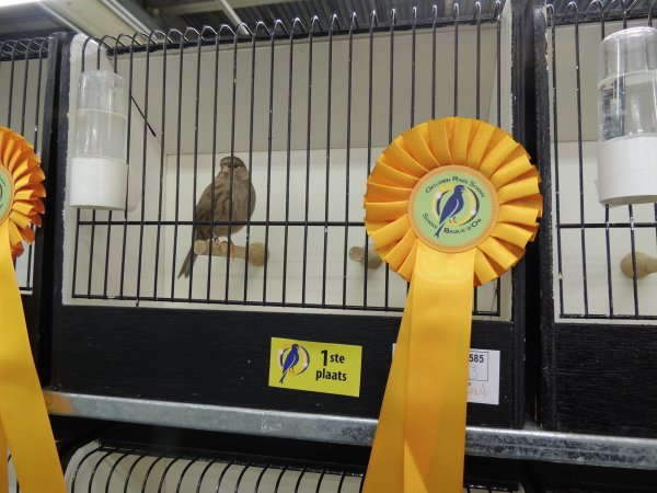 Mijn medaille winners in Roeselare