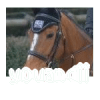 YOUandii