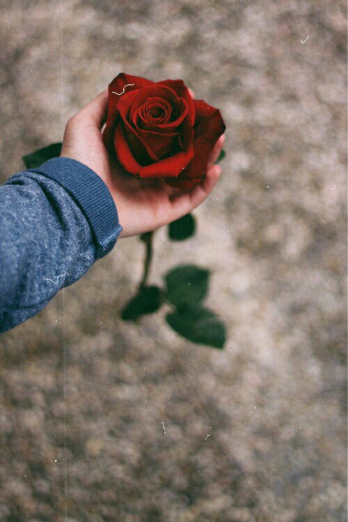 Si tu aimes une personne, aie assez de courage pour le lui dire, sinon sois assez courageux pour la voir avec la personne qui l'aime