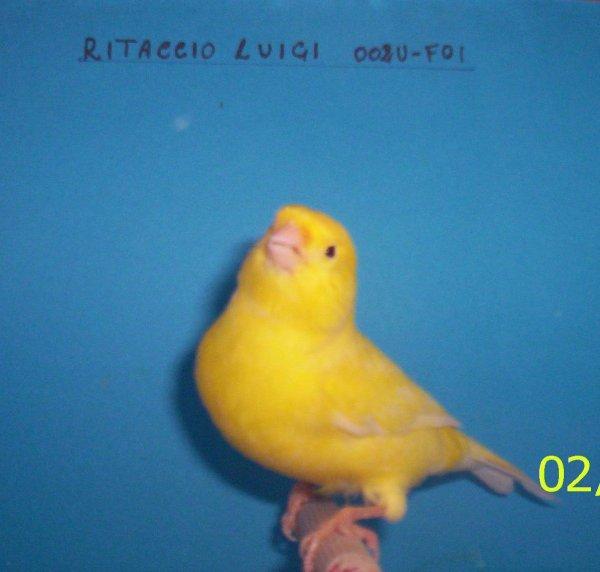 GIALLO BRINATO 2010