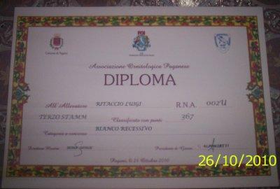 DIPLOMI REGIONALE CAMPANIA 2010